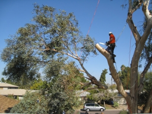 tree-removal-central-coast