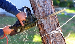 tree-removal-chainsaw
